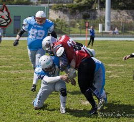 7-League, Wildcats ai playoff! Si gioca contro i Cocai